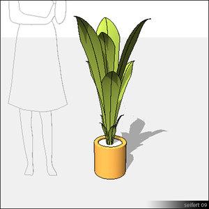 Plant-00703se