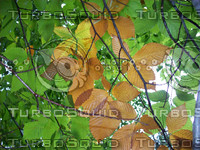 Beach Tree Leaves 01.jpg