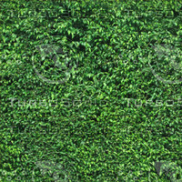 Ficus Hedge Tiles