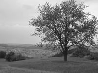 black white nostalgia nostalgic looking tree