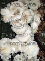 Mushroom 8.jpg