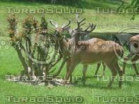 Deer Feast