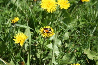 SPX_Bumblebee001