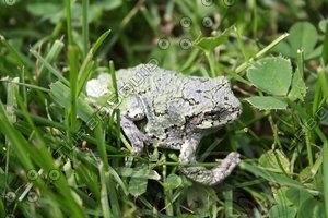 SPX_Frog001