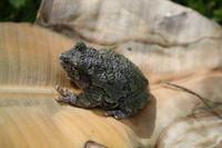 SPX_Frog003