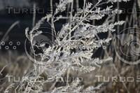 SPX_Frosty004