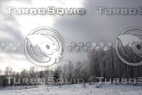 SPX_SnowyForest004