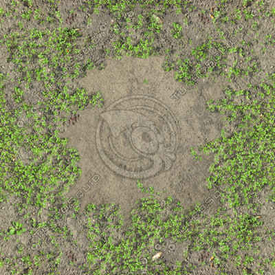 Clover ground covering with a large dirt patch texture