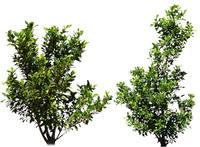 dry climate plant set.psd