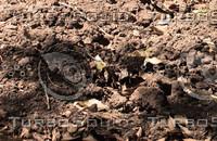 Ground soil texture