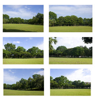 background trees sets.rar