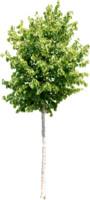 tree83