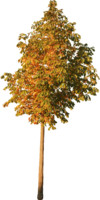 tree91
