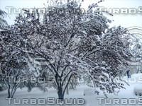 Snow Tree 20091112 048