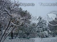 Snow Tree 20091112 055