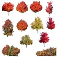Collection_Autumn_Trees.zip