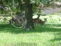 Deer standing their ground