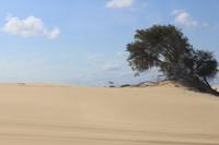 Dunes 16 (JB HI REZ)