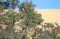 Dunes 12 (JB HI REZ)