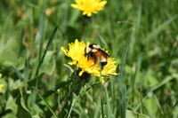 SPX_Bumblebee004