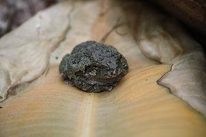 SPX_Frog002