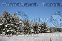 SPX_SnowyForest002