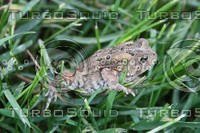 SPX_Toad001