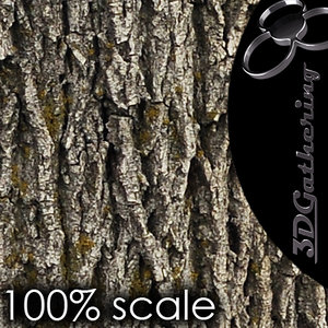 High-res Tree Bark - Seamless and Tileable