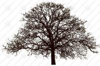 TREE-01