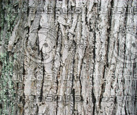 bark03.jpg