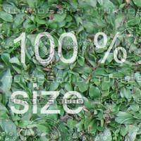 High resolution seamless grass