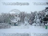 Snow Tree 20091112 052