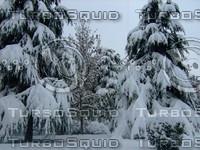 Snow Tree 20091112 062