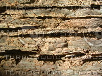 20 Bark Textures, High Resolution