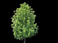 Tree & Shrub Collection