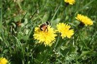 SPX_Bumblebee003
