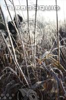 SPX_Frosty011