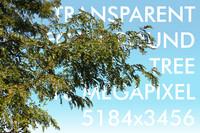 Foreground Tree022