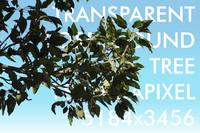 Foreground Tree023