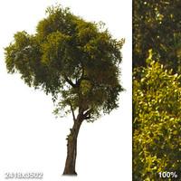 Alpha Tree