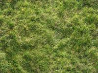 grass_06