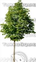 tree113