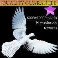 pigeon hires textures