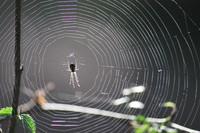 Spider Web_0001