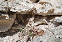 Rock Surface_0001