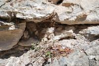 Rock Surface_0001
