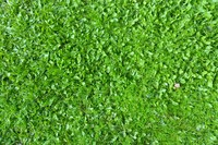 Grass 07