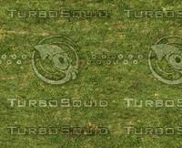 Grass lawn