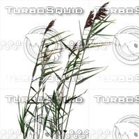 Grass_26