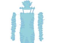 avatar skin uv map